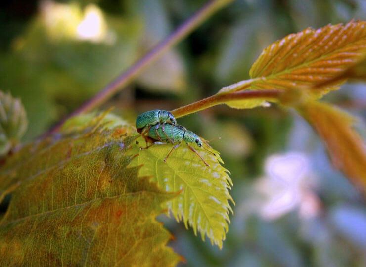 sex05_beetles_green.jpg