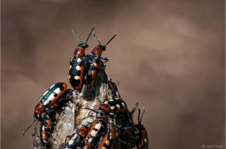 sex06_beetles_group.jpg