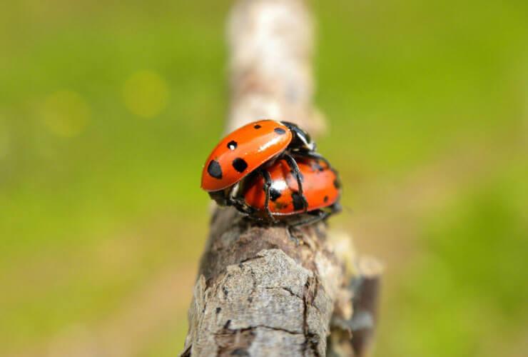 sex04_ladybug_red2.jpg
